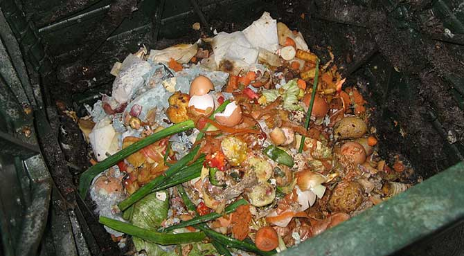 Compost from food wastes