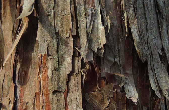 Natural cedar shavings