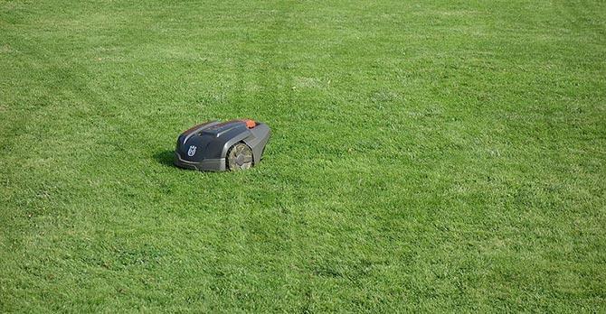 Epsom salt makes lawn greener and healthier
