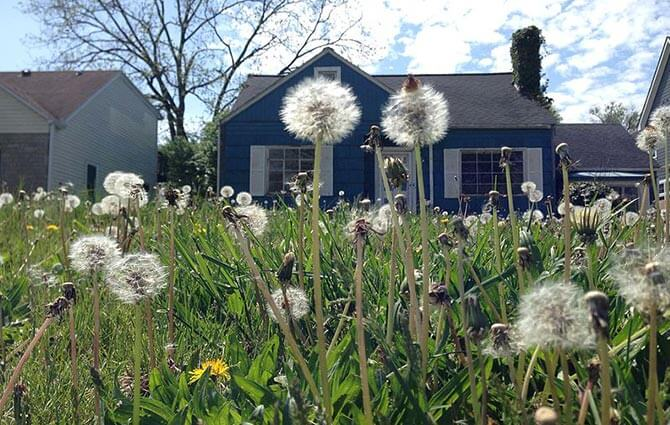 Epsom salt organic herbicide weeds
