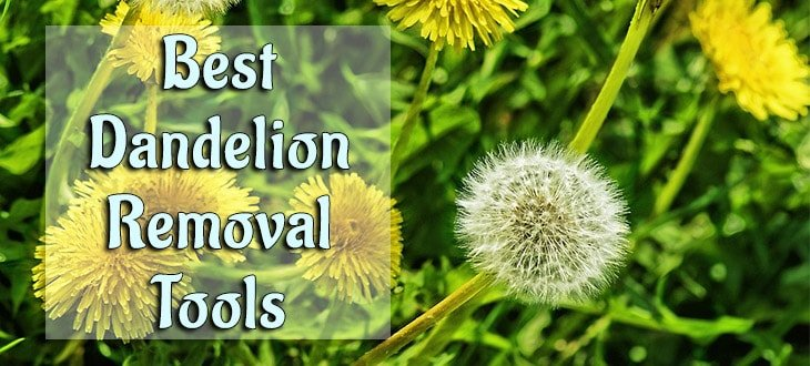 6 Best Dandelion Removal Tools. Get Rid of Dandelions Permanently