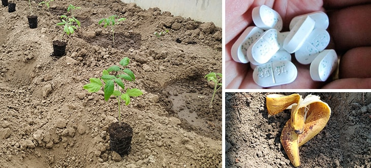 10 Things To Add To Tomato Planting Hole For Better Tomatoes