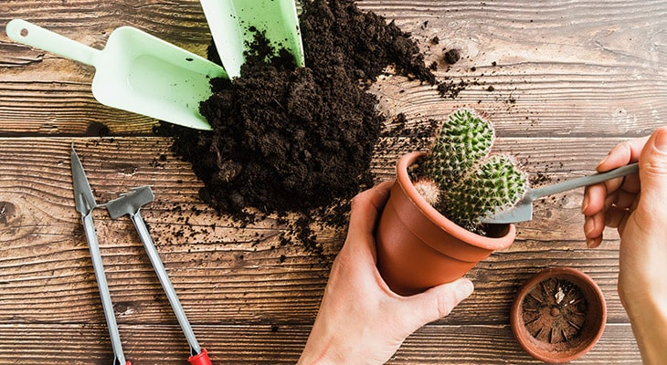 What Is The Best Soil For Cacti And Succulents?