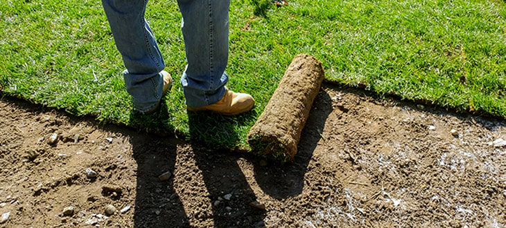Landscape Grading Guide: Importance, Costs, and More