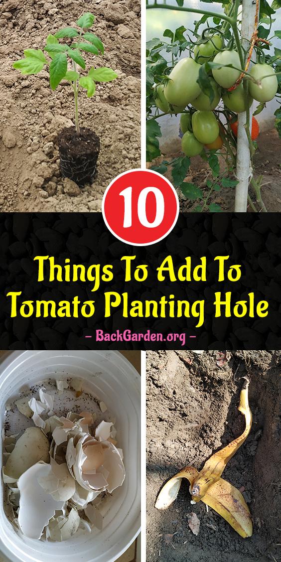 Tomato Planting Hole Recipe
