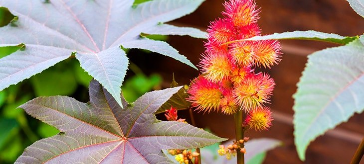 10 Tall Weeds With Thick Stalks That Might Invade Your Garden