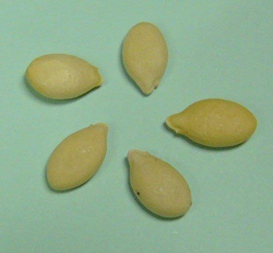 Winter melon seeds