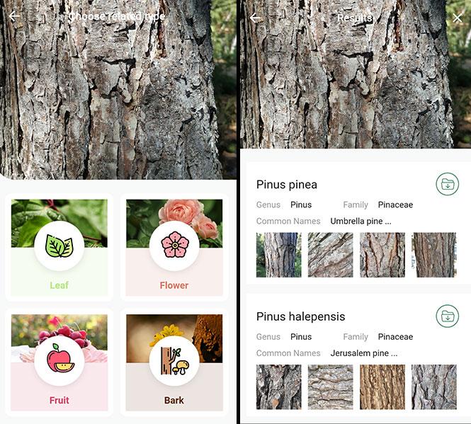 LeafSnap Identify Tree Species