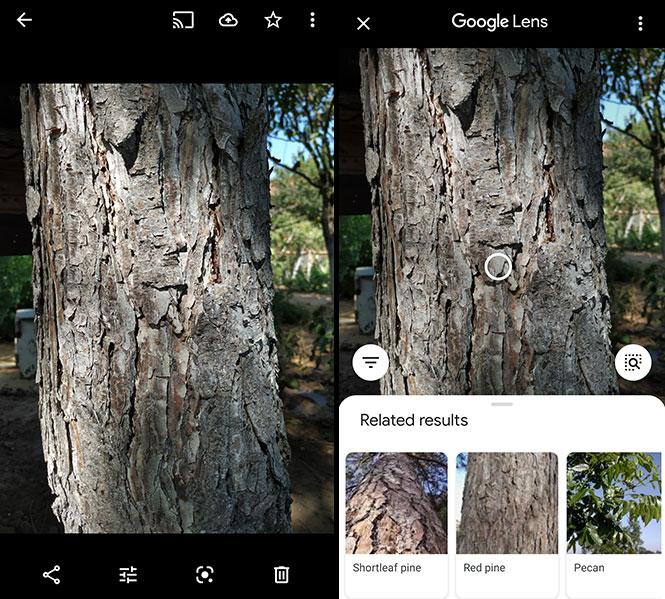 Google Lens App Tree Identification