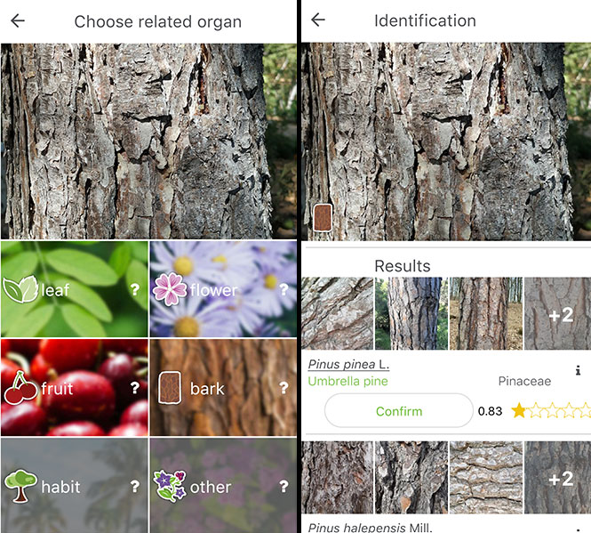 PlantNet Tree Identification App