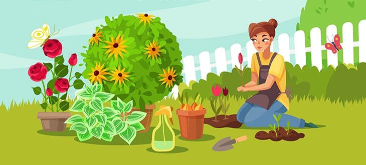 What Is An Annual, Perennial, And Biennial Plant?