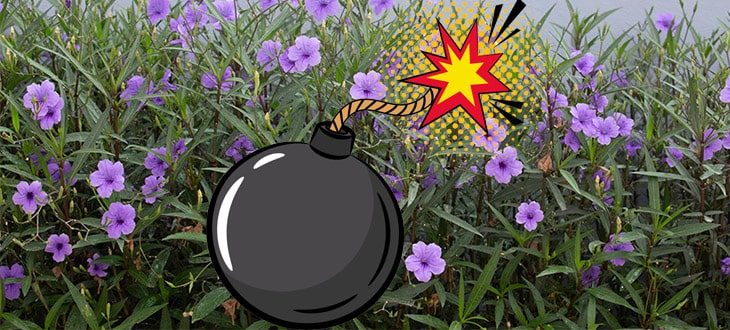 10 Explosive Plants With Ballistic Seed Dispersal Mechanisms