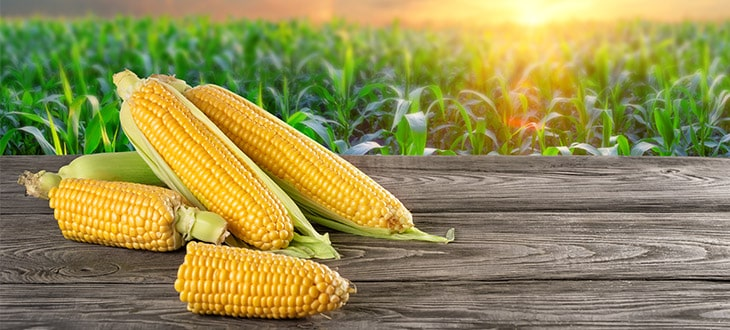 Is Corn Man-Made?
