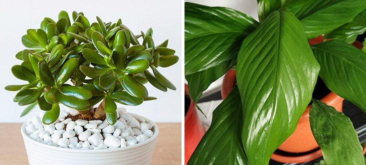 10 Plants With Waxy Leaves