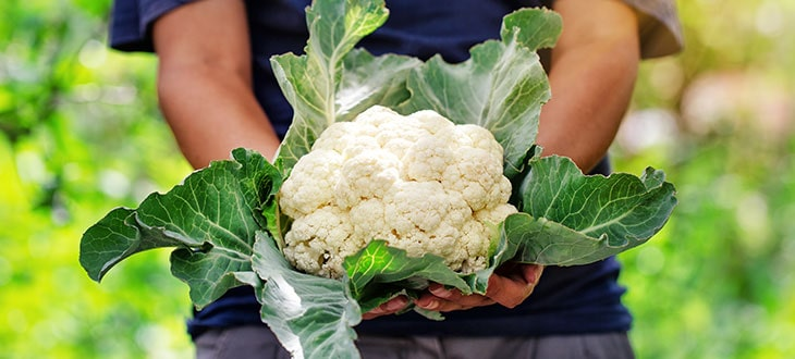 Is Cauliflower Man-Made?