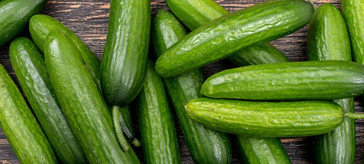 Burpless Cucumbers: Are These Better Than Regular Varieties?