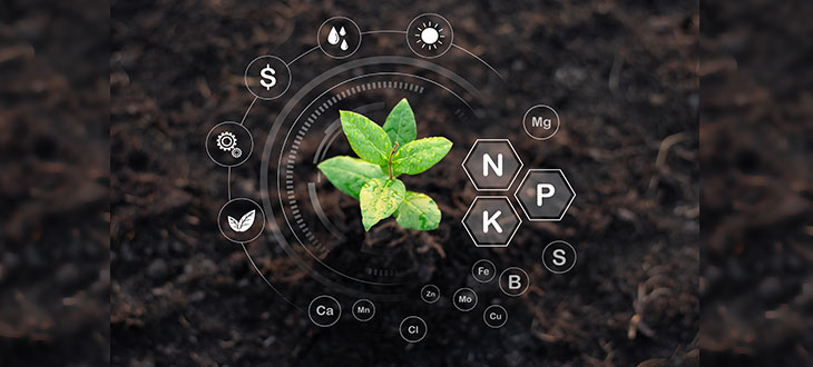 Choosing The Right Fertilizer Based On Its N-P-K Ratio