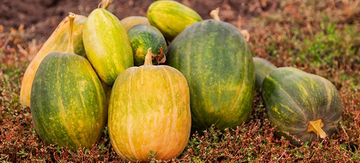 How To Cure Pumpkins For Storage
