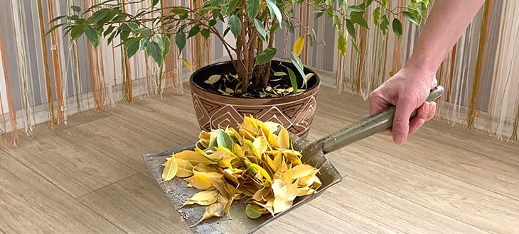 Signs Of Over-Fertilized Plants And How To Save Them